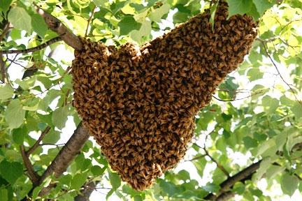 wild-bees-nest