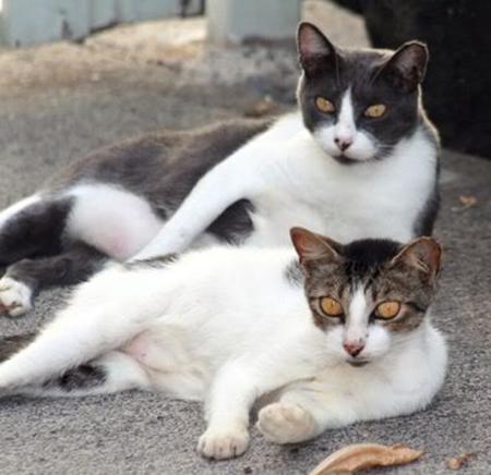 wild-feral-cat